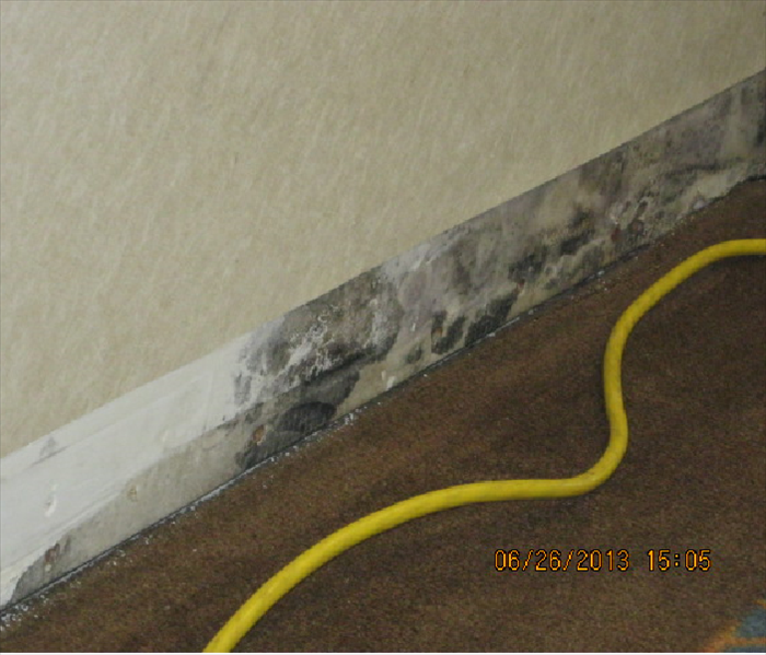 mold behind on wall behind removed cove base trim and obviously growing up behind the vinyl on the wall